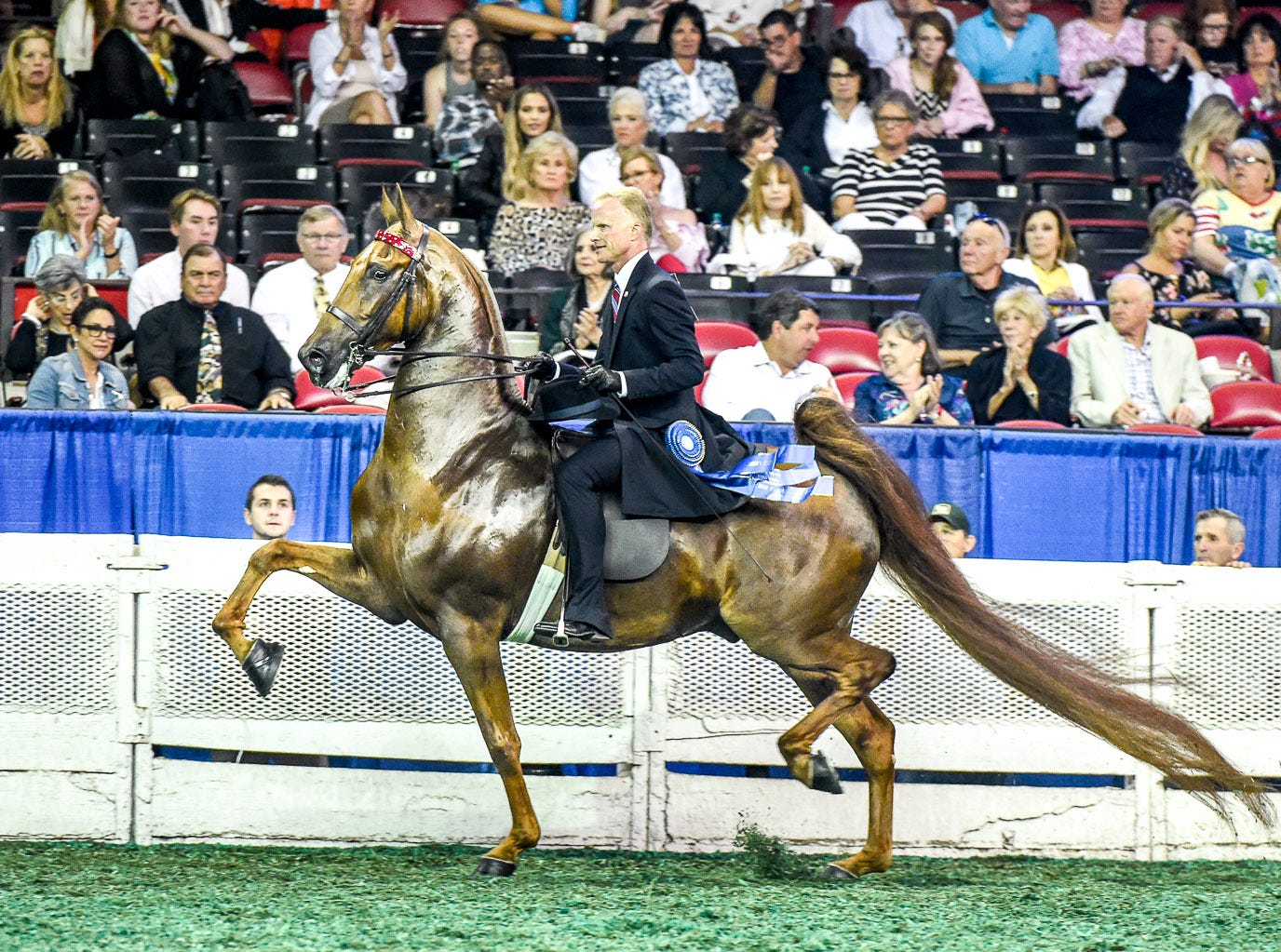 3 GAITED OVER 15.2 STAKE winner Tango's Token Kiss (124817G) (WGC, WC, RWGC) 2012 Tango's Parting Kiss (111171S) X CF Deny Me Not (135288M)1 Owner: Grace Arnold LLC Rancho Santa Fe, CA Breeder: Harrison Shiflet and/or Beverly Shiflet Exhibitor: Smith LillyTrainer: Smith Lilly