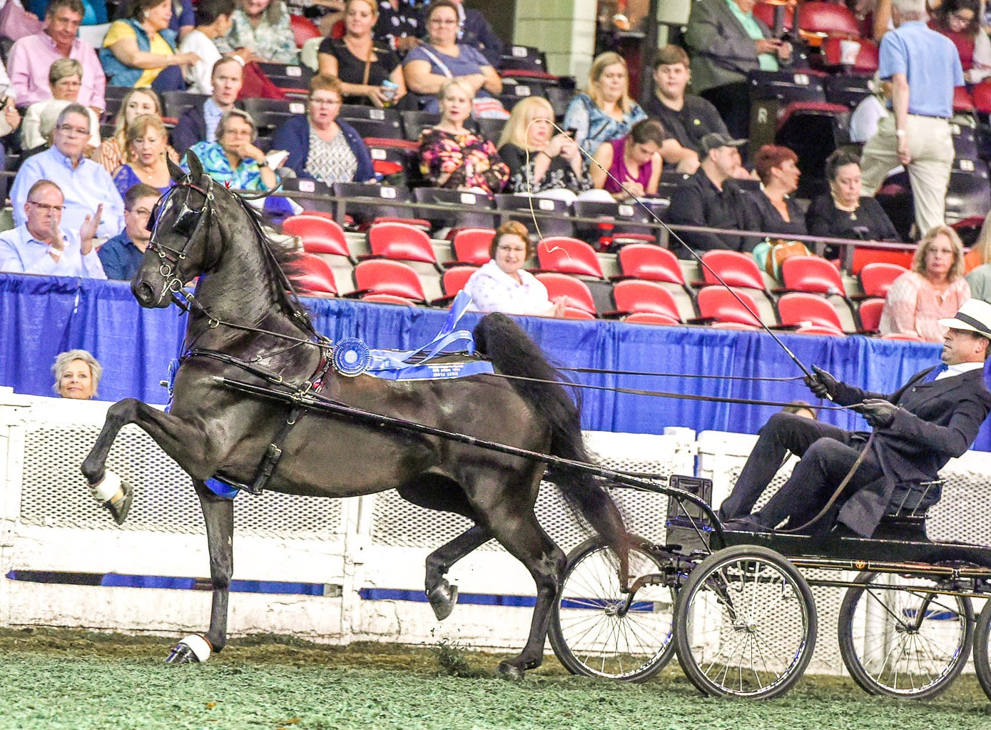 ASR NATIONAL 3 YEAR OLD FUTURITY FINE HARNESS winner She's Epic (152218M) (WC) 2015 