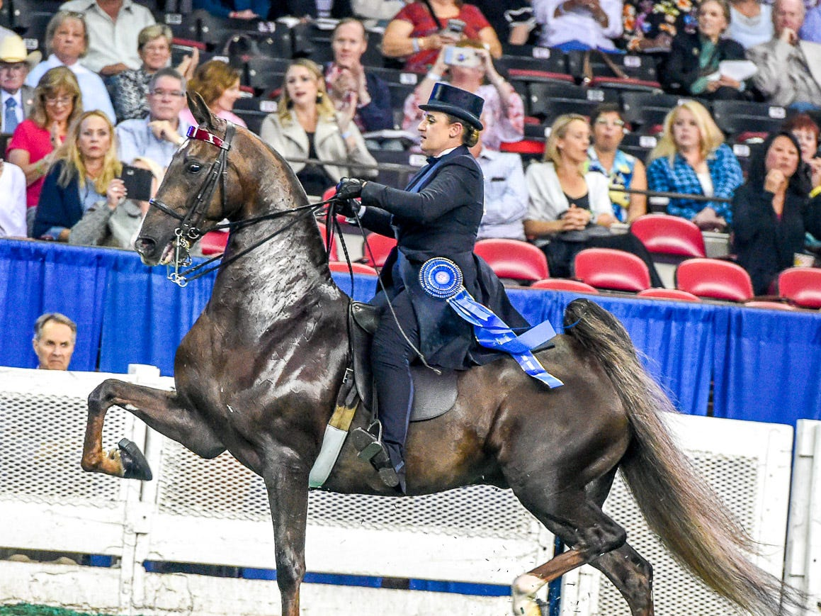 3 GAITED 15.2 & UNDER STAKE winner Don't Mention It (126016G) (WC) 2013 Don't Tell 'Em Jack (123325S*) X Heir's Perfect Rose WRF (135038M) Owner: Barbara Goodman Manilow Chicago, IL Breeder: Wrapped In Rainbows Farm Exhibitor: Emily J. LeeTrainer: Charles (Tre) R. Lee III
