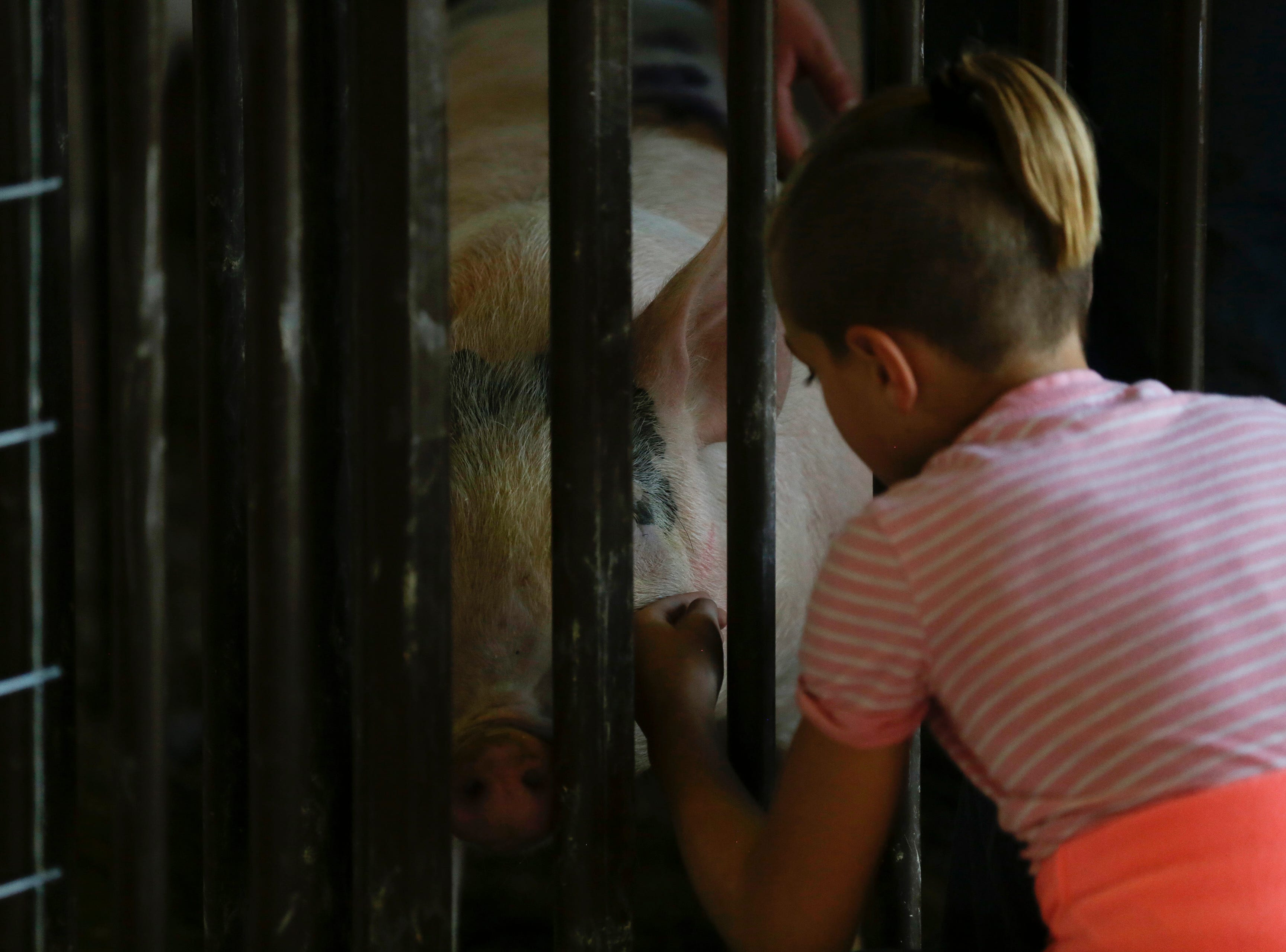 Claire Dorshorst, 9, pets her brother's pig before it goes up for auction during the market animal sale at the Central Wisconsin State Fair in Marshfield Wednesday, August 22, 2018.