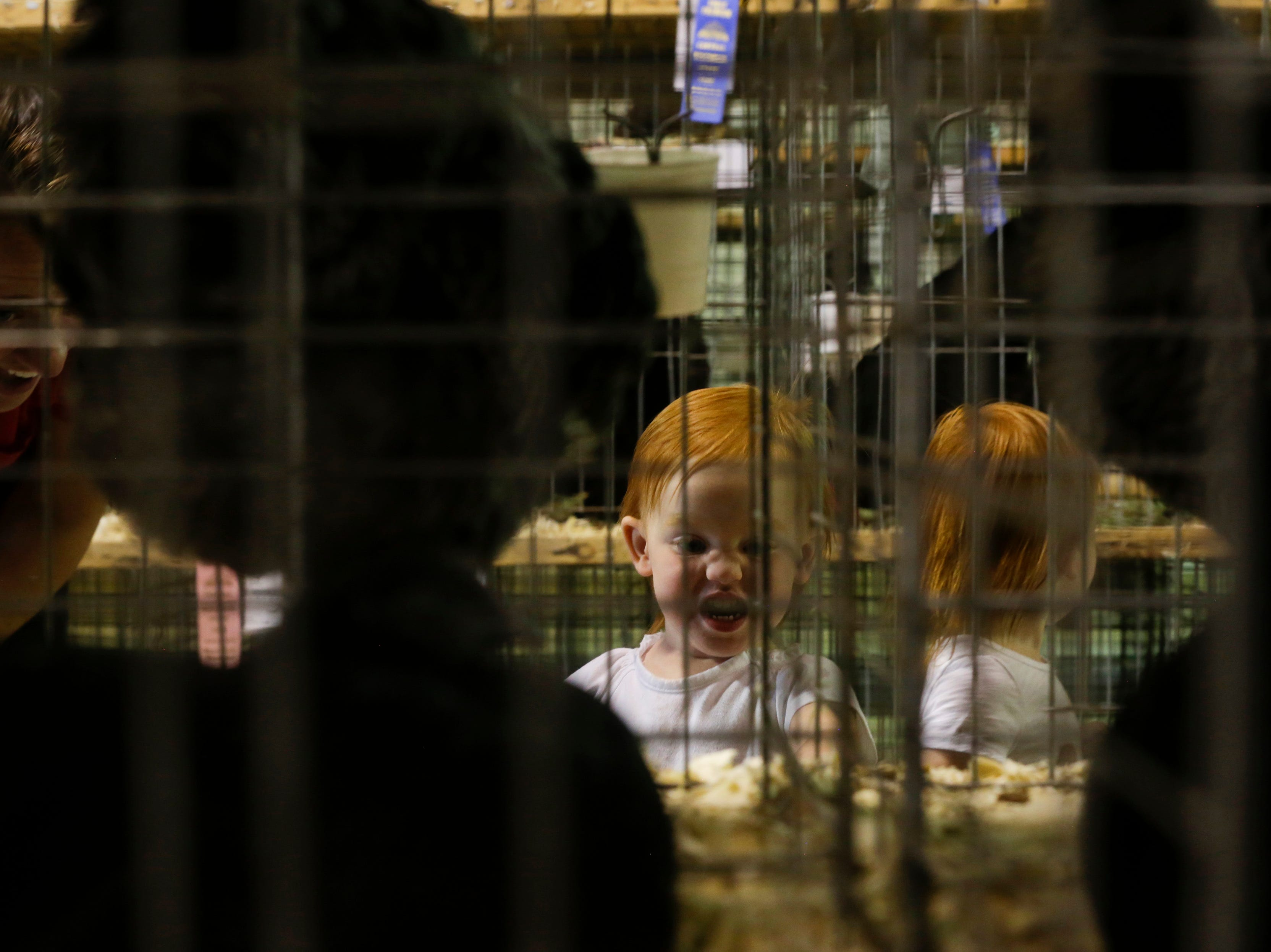 Twins Lauren and Leah Landwer, 2, look at chickens in their cages at the Central Wisconsin State Fair in Marshfield Wednesday, August 22, 2018.