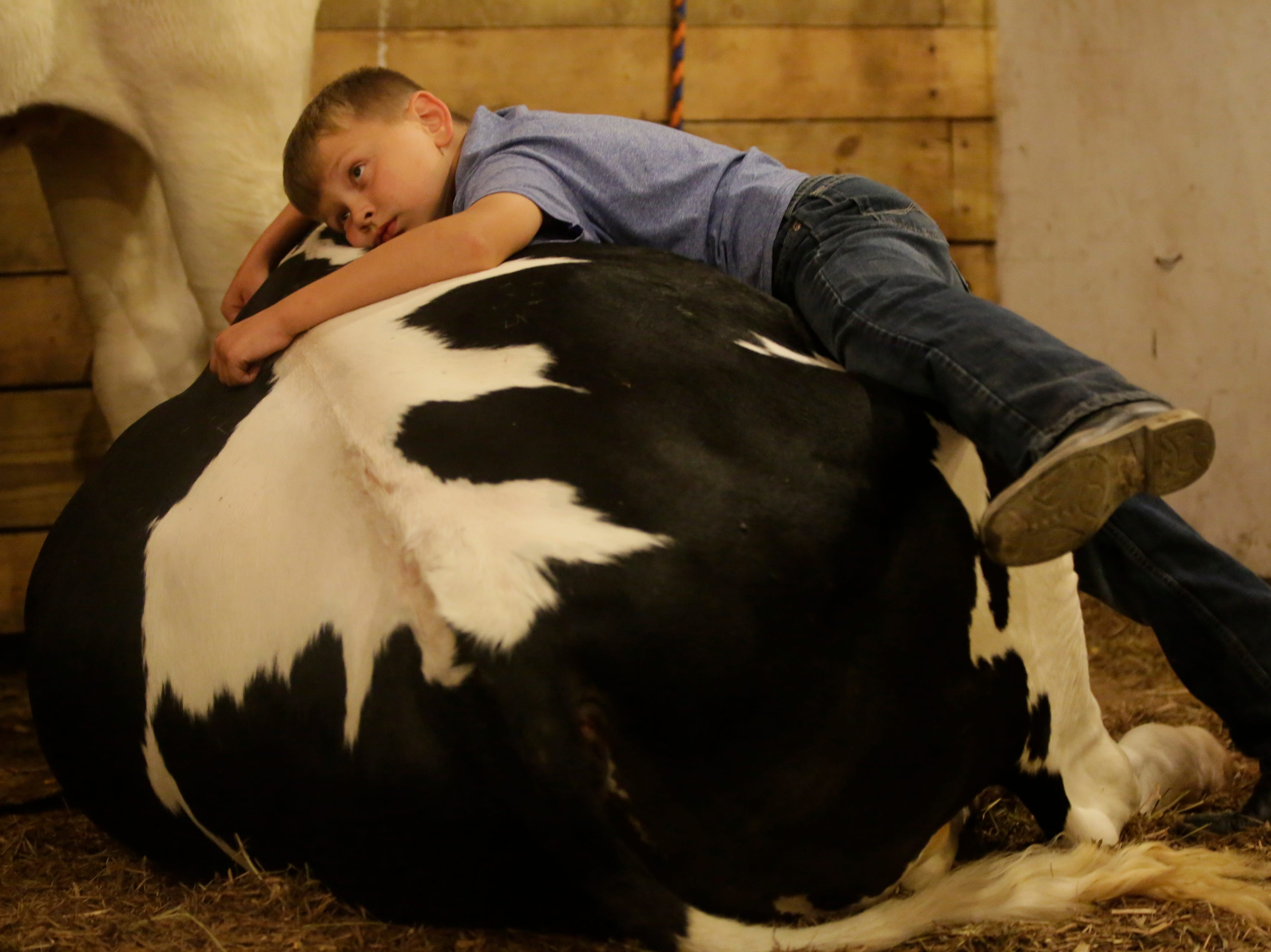 """""""I think he will miss me and his other friends,"""" said Harland Meissner, 9, while sharing some last moments with Brain-ee, after the cow was purchased by Chili Implements earlier in the night during the market animal show at the Central Wisconsin State Fair in Marshfield Wednesday, August 22, 2018."""
