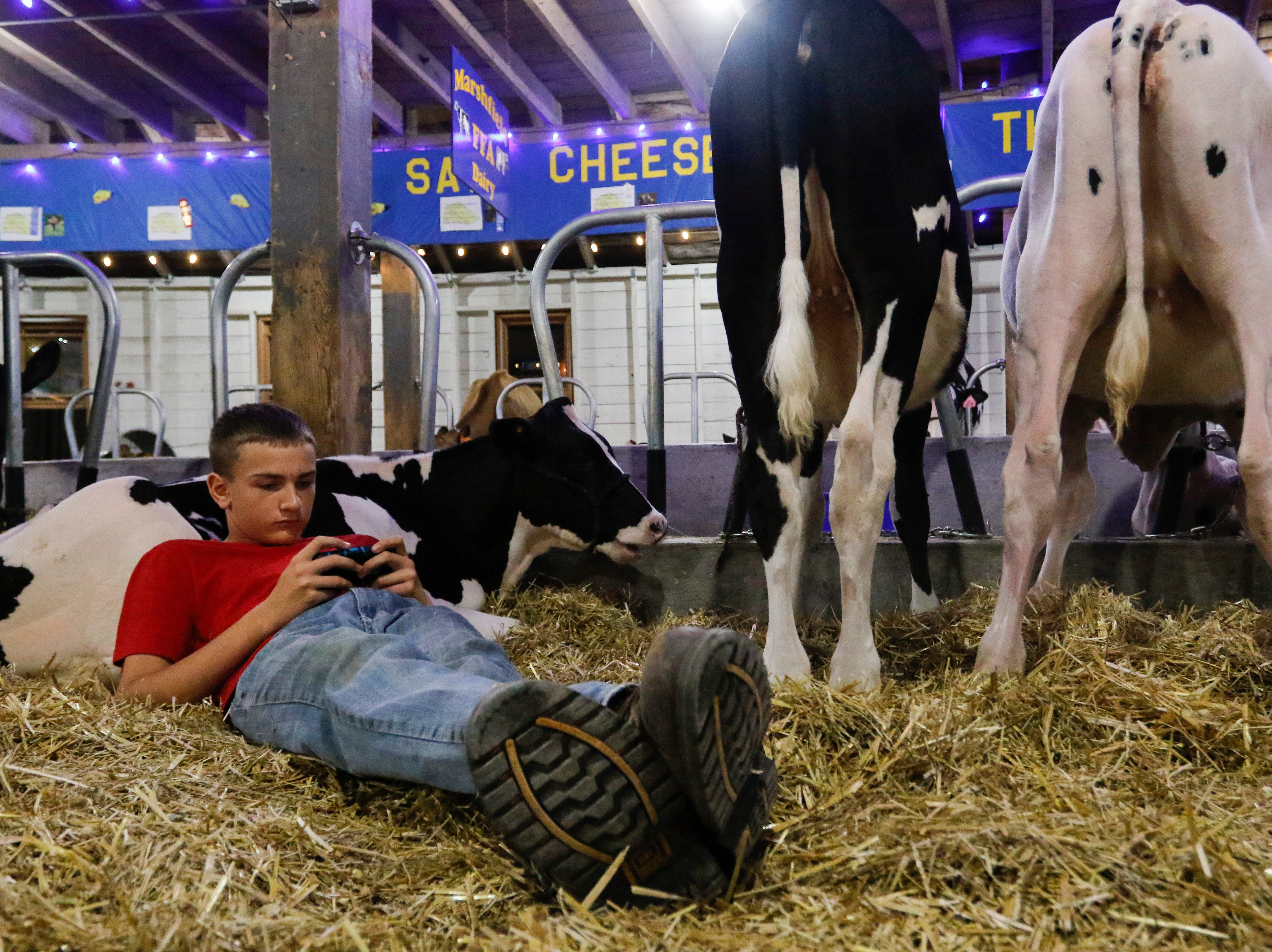 While laying against his cow Echo, Carter Grove, 14, a member of Marshfield FFA, plays a game on his phone in the world's largest round barn at the Central Wisconsin State Fair in Marshfield Wednesday, August 22, 2018.