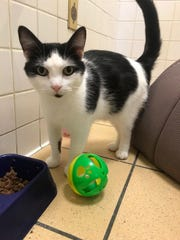 Galileo is a laid back, friendly boy with an outgoing and curious personality.