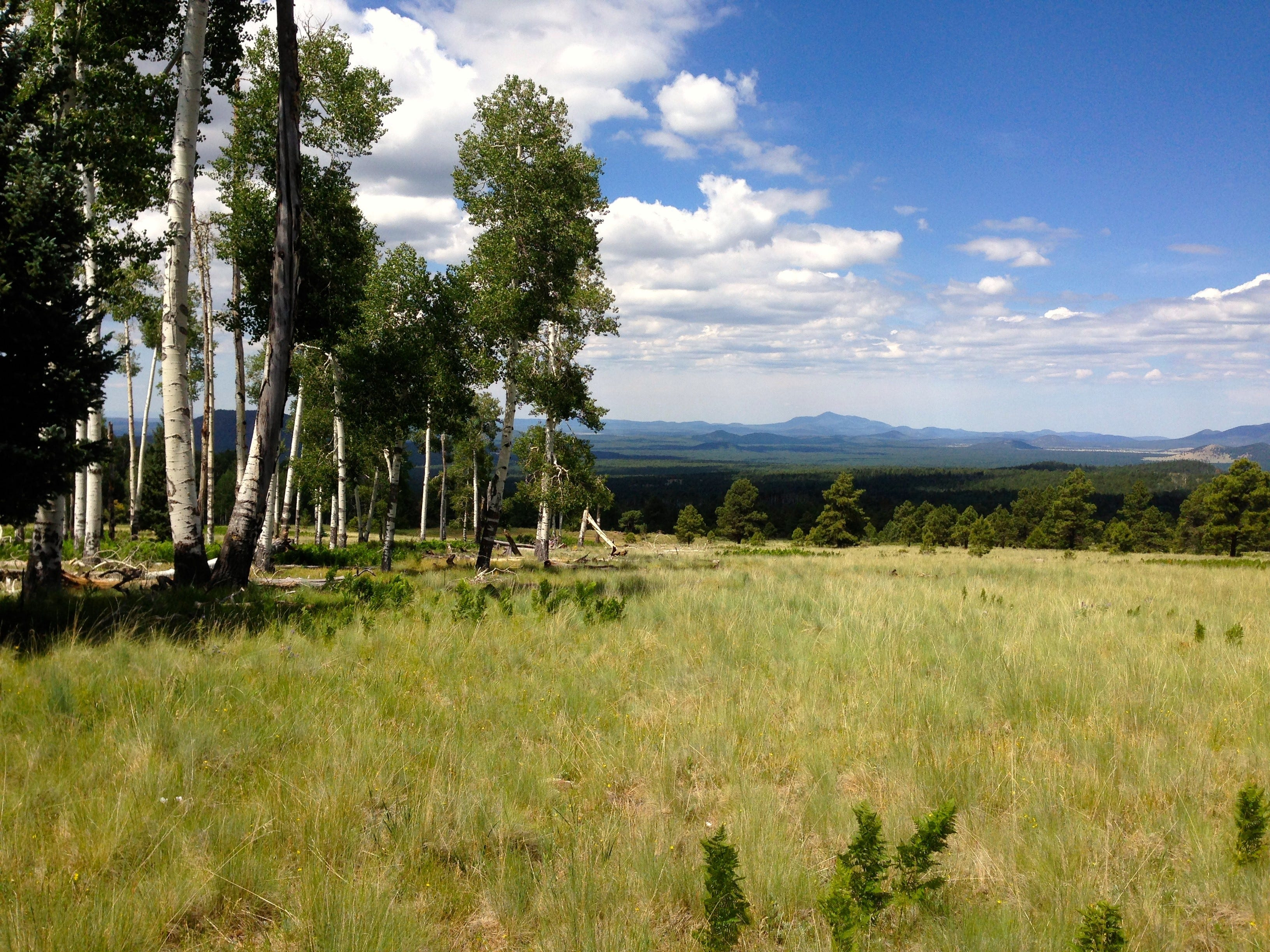 The trail from Aspen Corner north of Flagstaff ambles through a combination of forest and meadow.