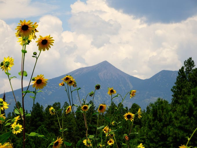 Flagstaff's are open for recreation. The landscape is green and wildflowers are blooming.
