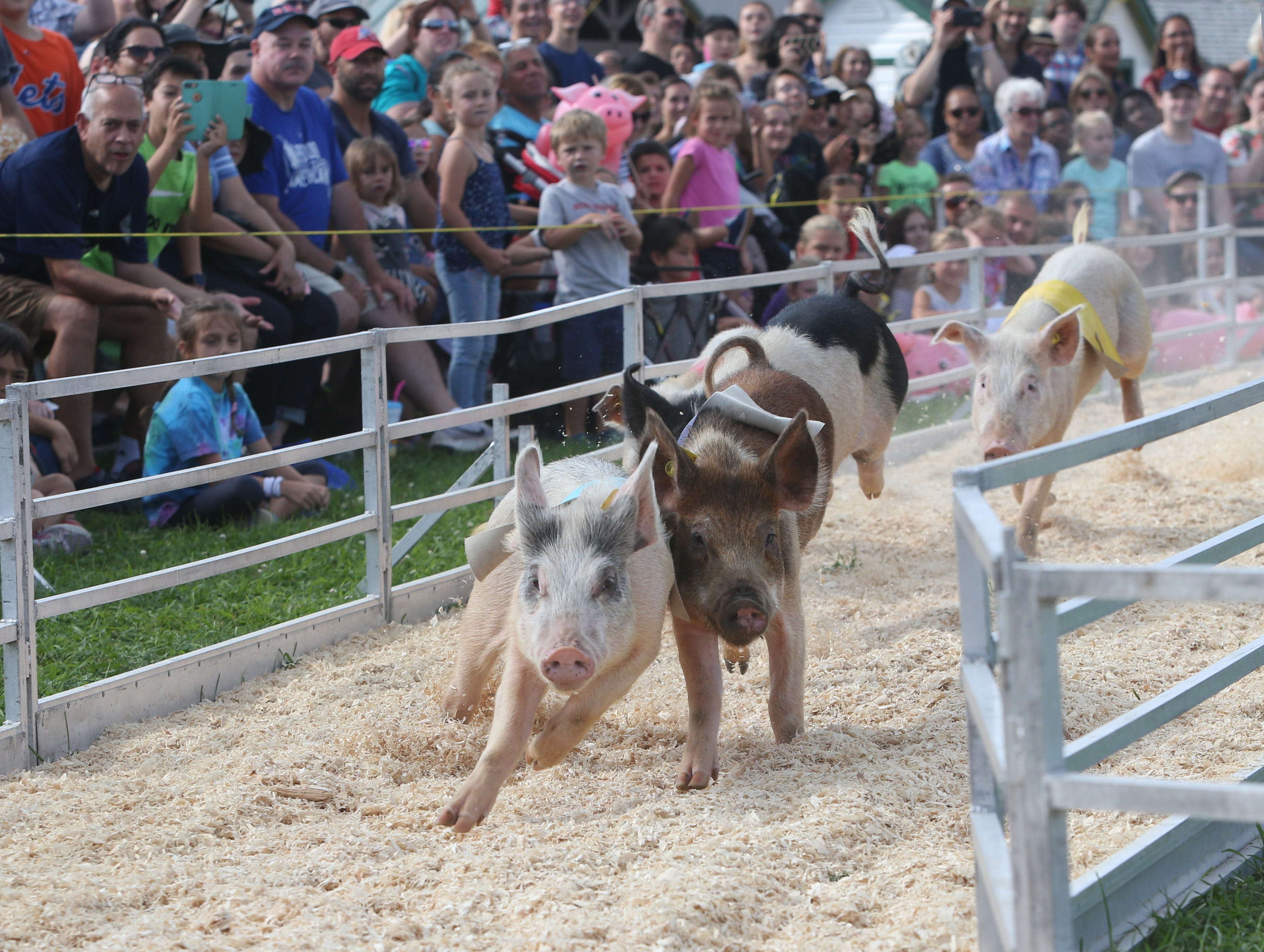 The pig races at the 2018 Dutchess County Fair.