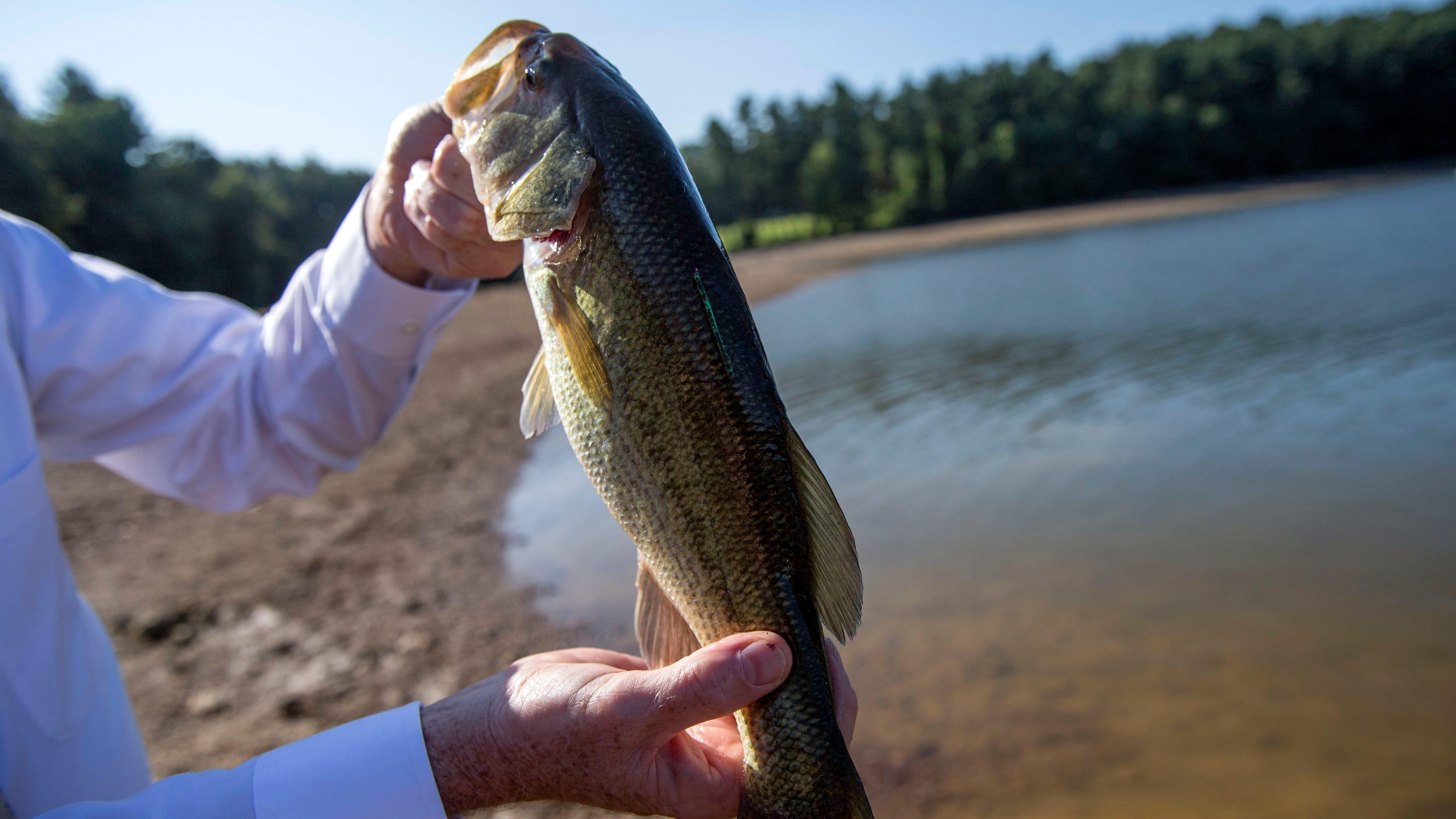 Fishing: Susquehanna River smallmouth bass population growing