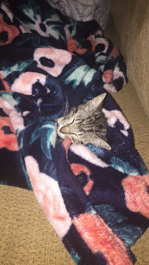 Bullet, a four month old kitten, takes a nap. The kitten is in foster care and recovering from an amputation.