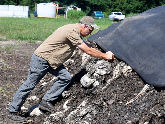 Eric Walter, president and chief composting officer of Black Bear Composting, pushes a several foot thermometer deep into one of their composting piles as he collects the temperatures from inside the pile at their location in Crimora on Thursday, August 23, 2018.