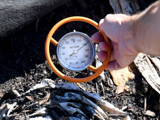 The temperature inside one of the composting piles at Black Bear Composting is 142 degrees on Thursday, August 23, 2018. Eric Walter, president and chief composting officer of Black Bear Composting, had pushed the several foot thermometer deep into one of their piles while collecting internal temperatures at their location in Crimora.