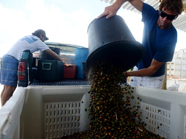 Catching saw palmetto berry poachers at heart of change in