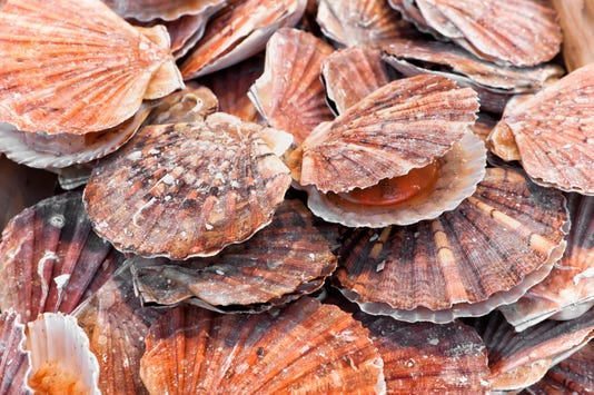 A Bunch Of Scallops For Sale At A Street Market