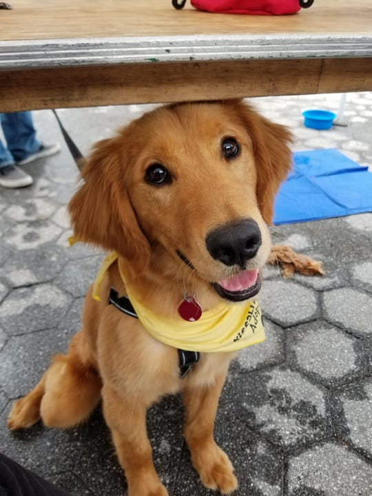 Doc, the golden retriever