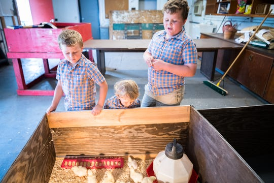 Eli Holt, 6, Knox Holt, 1, and Jax Holt, 8, stand by the pen with a group of one-week-old chicks at Erwin High.