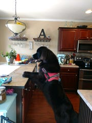 Lexie Autrey's dog, Ellie, an 18-month-old Newfoundland, is a handful. Autrey resorted to a shock collar for a while for training, but she said she never felt comfortable with it.