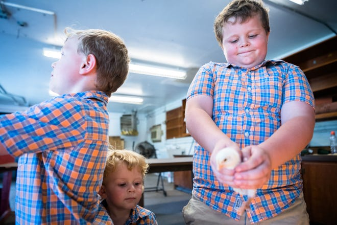 Jax Holt, 8, holds out a one-week-old chick with his brothers Knox Holt, 1, and Eli Holt, 6, at Erwin High. Jax and Eli will raise a group of the chicks to be shown at the Youth Market Broiler show at the Mountain State Fair in September.