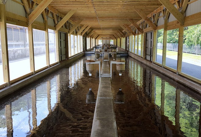New raceway enclosures will protect trout and other species at the Bath Fish Hatchery from predators.