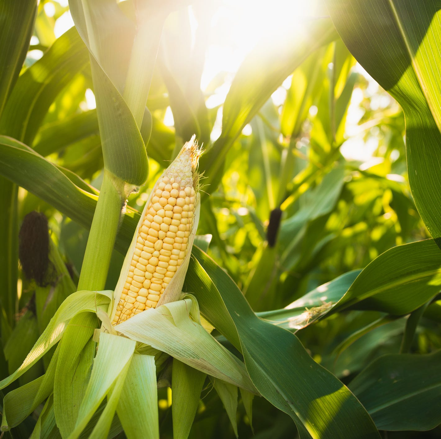 Trade war concerns, low commodity prices weaken producer outlook