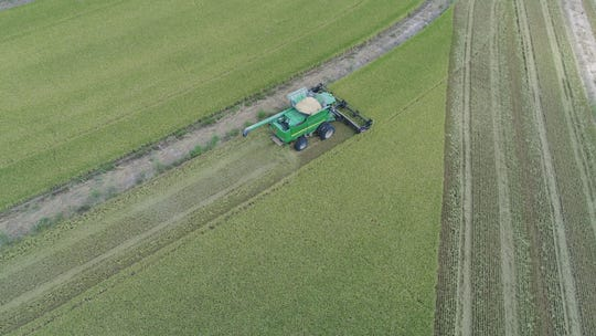 Alan Lawson at A&L Lawson farms in Crowley, LA, harvests rice for the 2018 growing season.