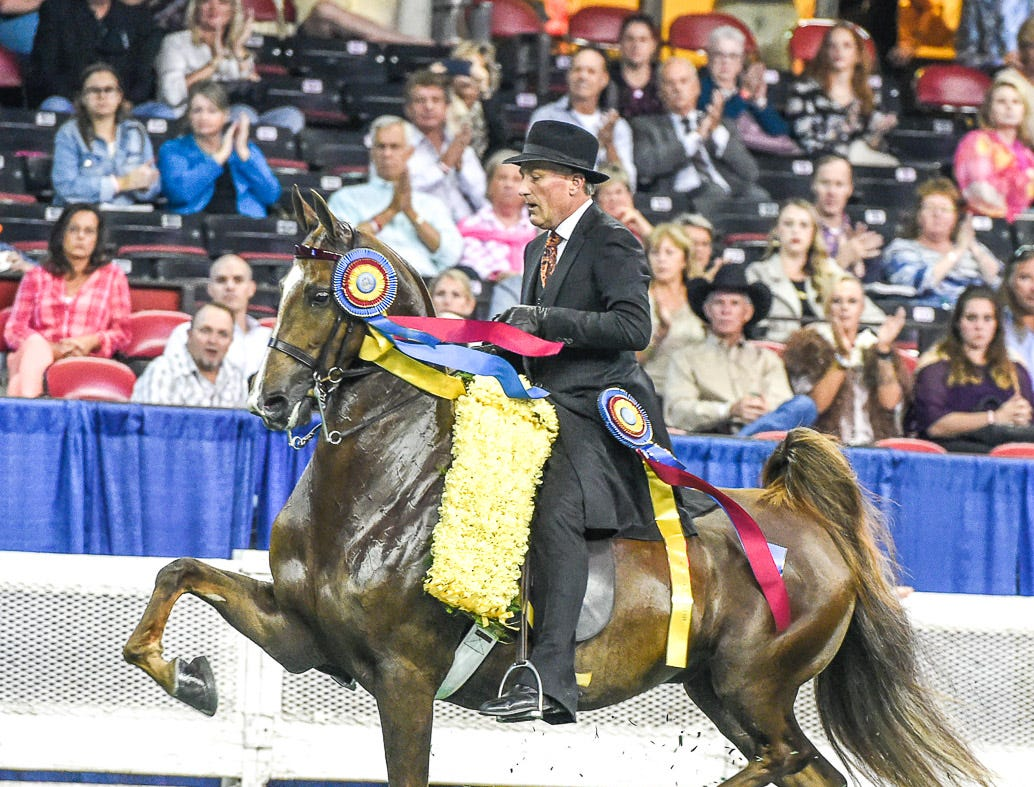 3 GAITED JUNIOR CHAMPIONSHIP winner 