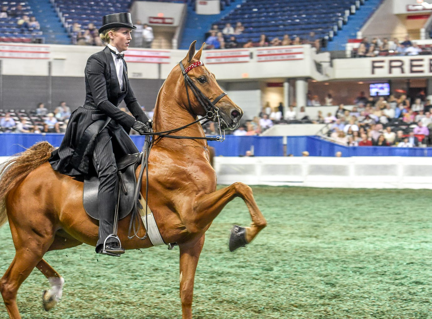 3 GAITED 3 YEAR OLD winner Beauty Marc (152968M) (WC, RWC) 2015