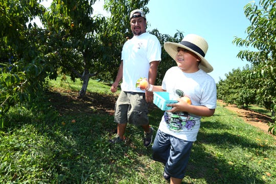 George and 8-year-old Andy Salas of Brooklyn pick peaches at Alstede Farms in Chester. August 24, 2018, Chester, NJ