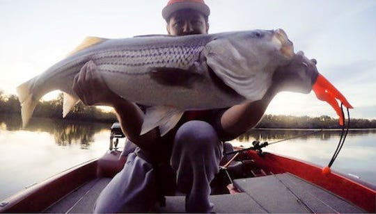 Adrian David Payne has caught big fish in the past, like this striper, but never one as big as the paddlefish he caught Wednesday on Old Hickory Lake.