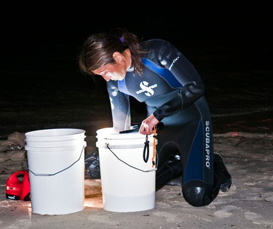 Regents Professor of Biology Michele Nishiguchi sorts through squids collected from Kurnell beach in Australia on a previous trip.
