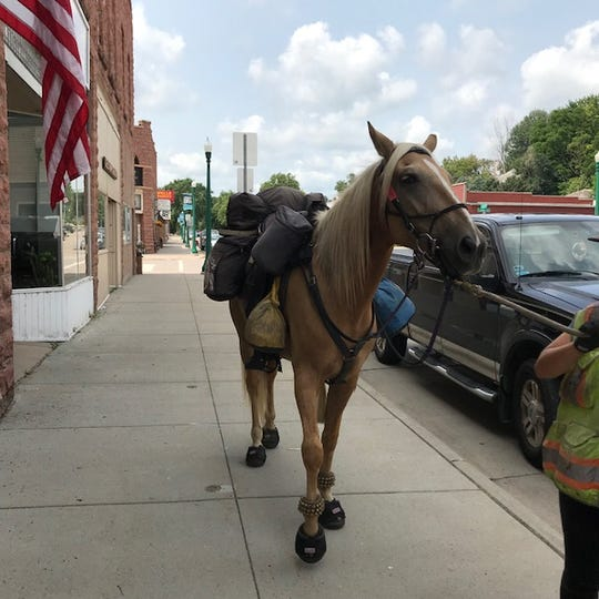 Apollo the horse made a visit to the Dell Rapids museum this summer.