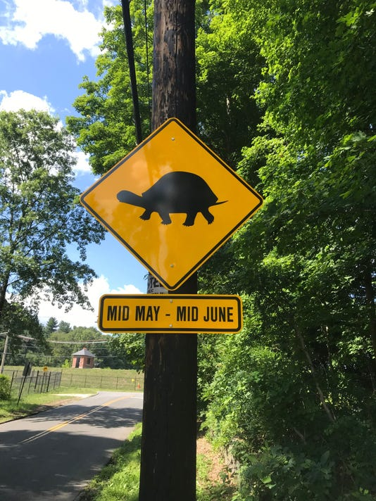 Turtle Sign 2