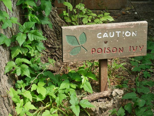 Wooden Sign Warning Of Poison Ivy In A Wooded Area