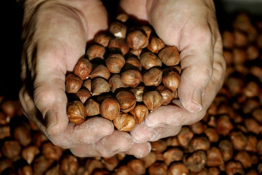 Hazelnuts constitute a nearly $7 billion global market that is on track to double in size over the coming decade, according to the Savanna Institute.