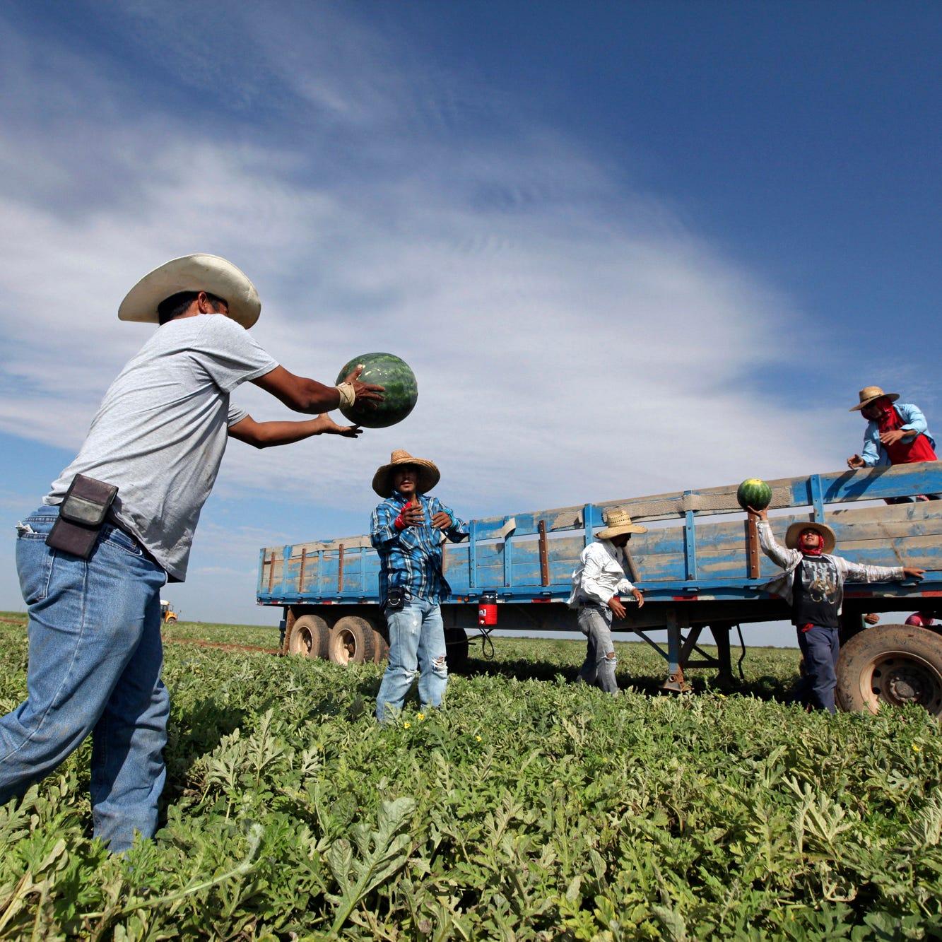 Mollie Tibbetts case exposes farms' worst-kept secret: hiring undocumented immigrants