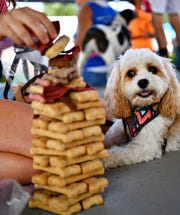 Champ, 4, a Cavapoo, looks on as her owner, Sophie Lanius, 14, of Chanceford Township, builds a Temptation Tower of dog bones during Dogs Day in the Park, an annual fundraising event for Animal Rescue Inc.'s Sanctuary for Life, at Marge Goodfellow Park in New Freedom, Saturday, Aug. 25, 2018. Dawn J. Sagert photo