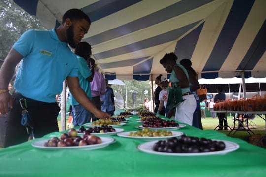 FAMU Grape Harvest Festival attendees sample grapes grown at the Mahan Drive facility. The festival attracted hundreds of people Saturday.