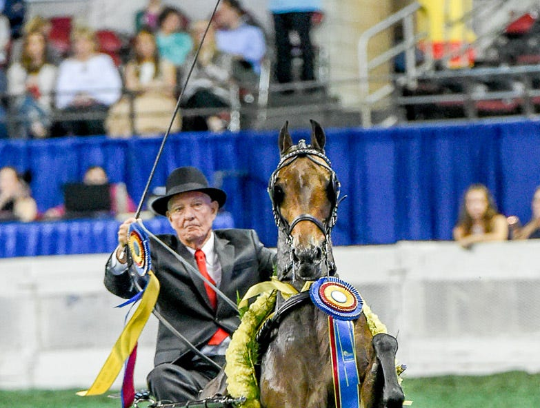 AMA HACKNEY PONY CHAMPIONSHIP winner SEAMAIR SIMPLY AWESOMEdriven by John Wrather for owner Charlotte Wrather trained by Maureen Campbell