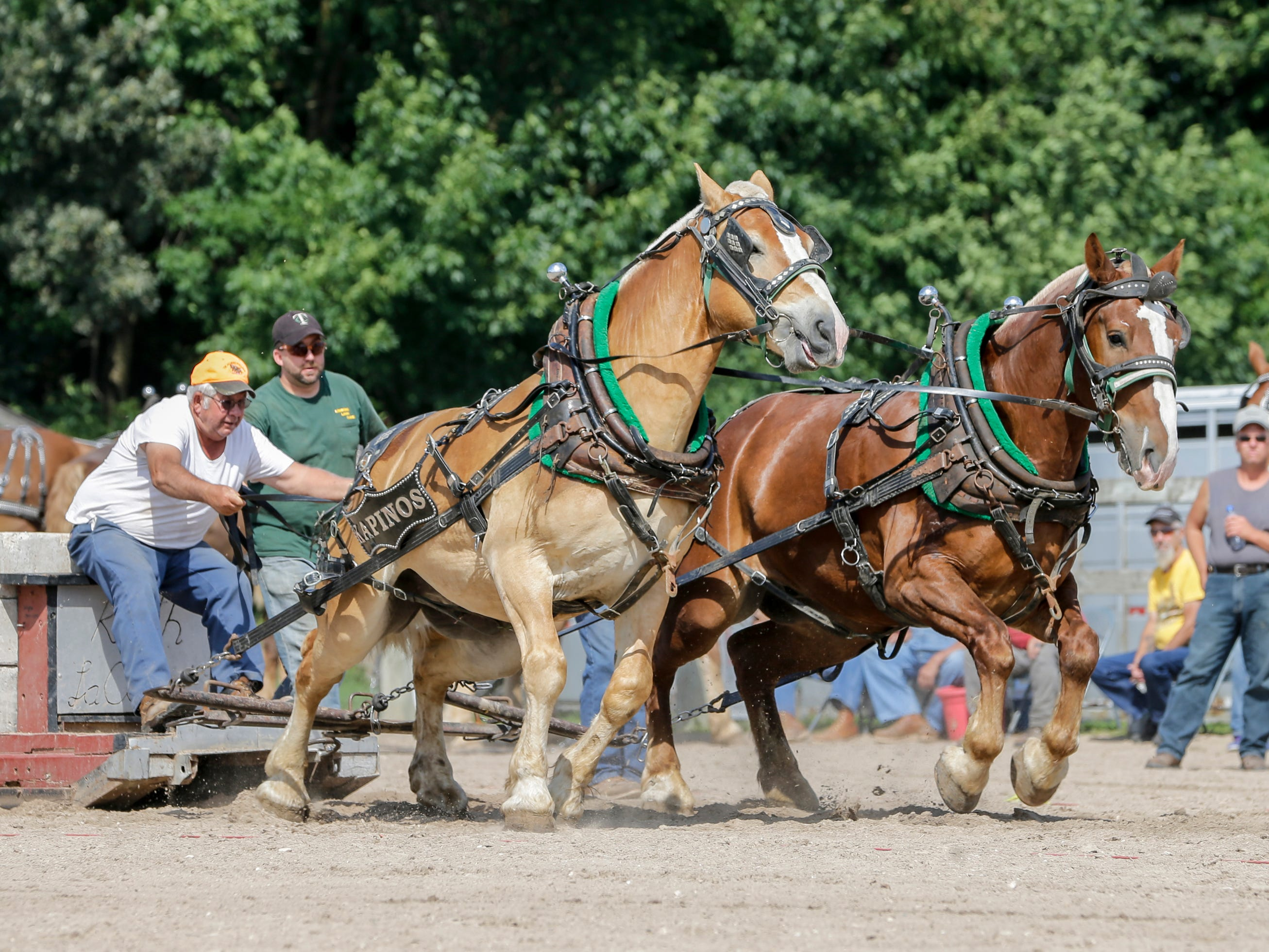 Tom Kapinos drives his team of Belgian draft horses carrying 6,300 pounds during the horse pull at the Manitowoc County Fair Thursday, August 23, 2018, in Manitowoc, Wis. Josh Clark/USA TODAY NETWORK-Wisconsin