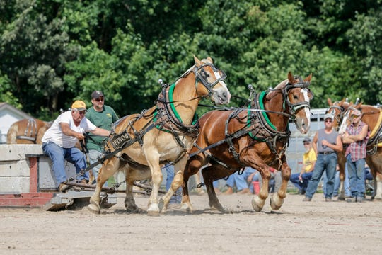 Tom Kapinos drives his team of Belgian draft horses carrying 6,300 pounds during the horse pull at the Manitowoc County Fair on Aug. 23, 2018, in Manitowoc.