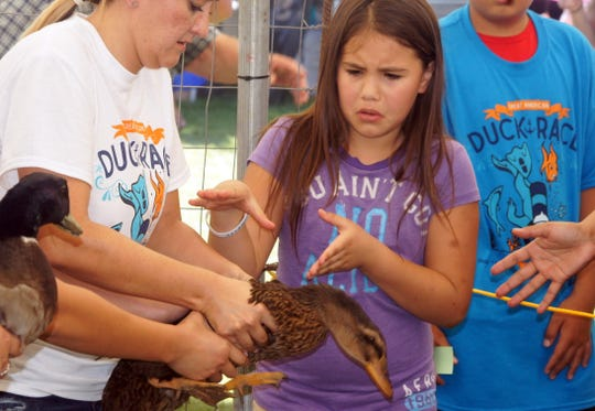 Handling a thoroughbred racing duck can be intimidating for first-time duck racers.