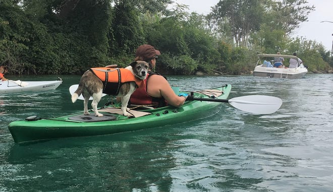 Dog Izzy travels aboard the kayak of Lou Anne Blount during the 2018 Port Huron Paddle Fest on Aug. 26, 2018