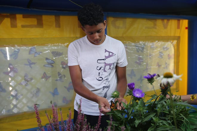 Jace Roper, 15, places a butterfly near a flower so it can get nectar. The Butterfly Experience was among the attractions at the 2018 Dutchess County Fair, which had its final day on Sunday.