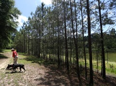 Three new green spaces on the horizon for Tallahassee | Living Here