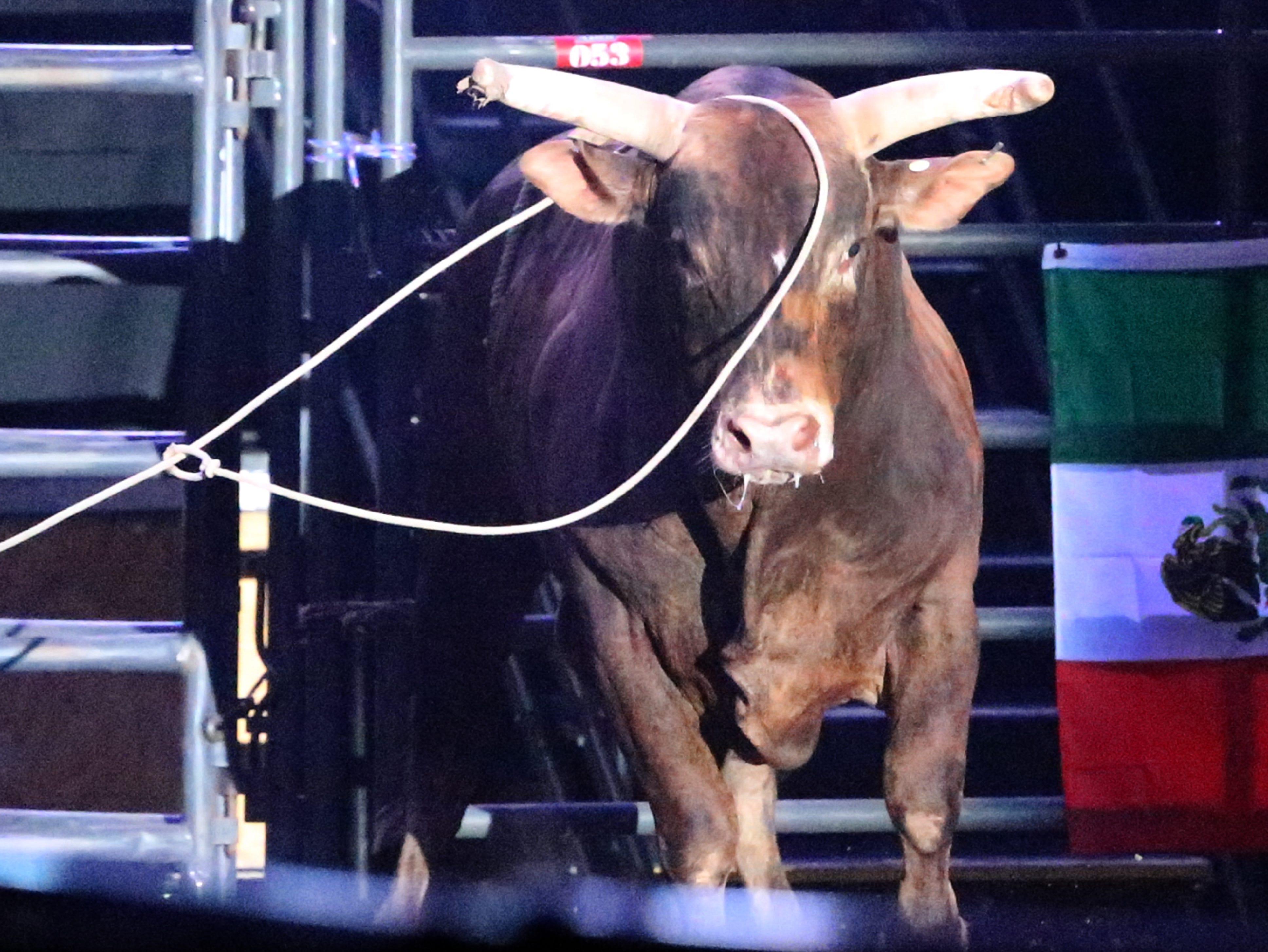 Horsemen nab a bull Saturday night during bull riding demonstrations.