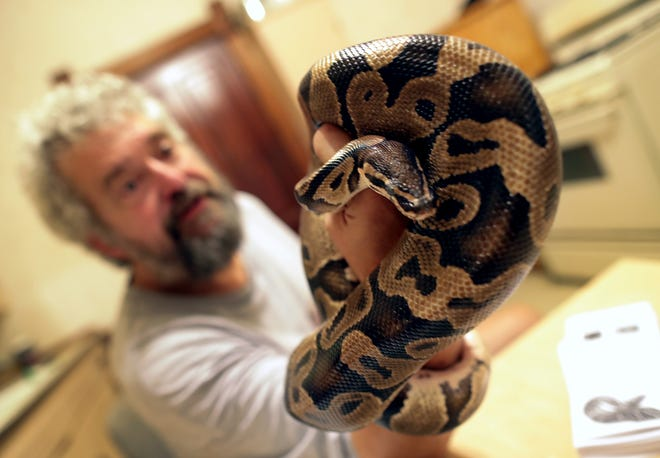 Steve Keller shows one of his 30-plus snakes on Friday at his home in Menasha.