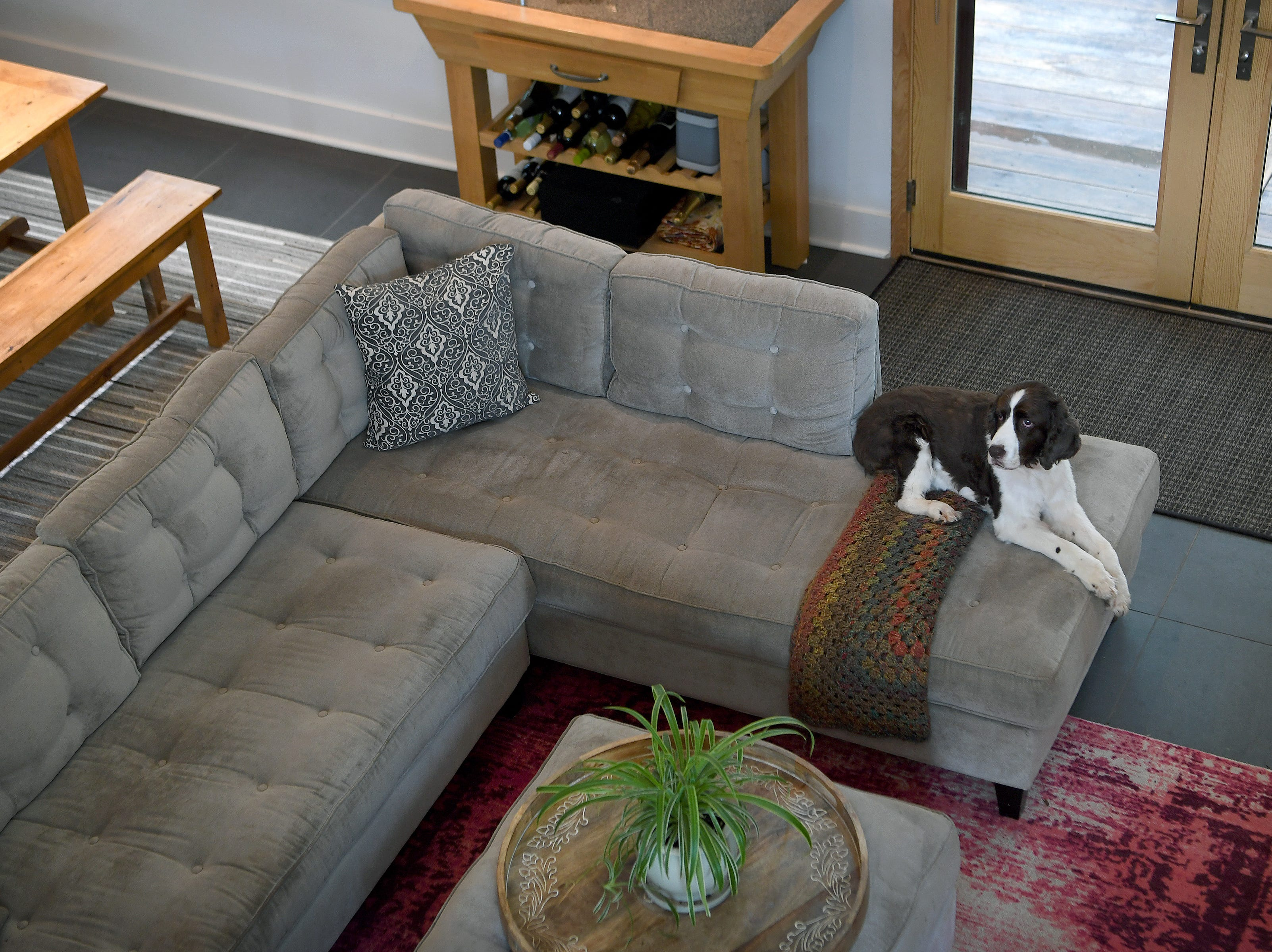 Zach, Annie Lundahl and Mary Ann Myers' English Springer Spaniel, lounges on their sectional sofa as seen from the upstairs of their lofted open-concept North Asheville home.