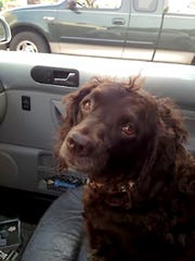 Coco, a dog who died after exposure to algal blooms.
