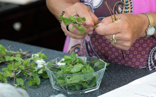 Kathy Burke Mihalczo pulls the leaves off a spearmint plant during a demonstration making herbal ice teas and summer drinks at Erin's Meadow Herb Farm in this file photo.