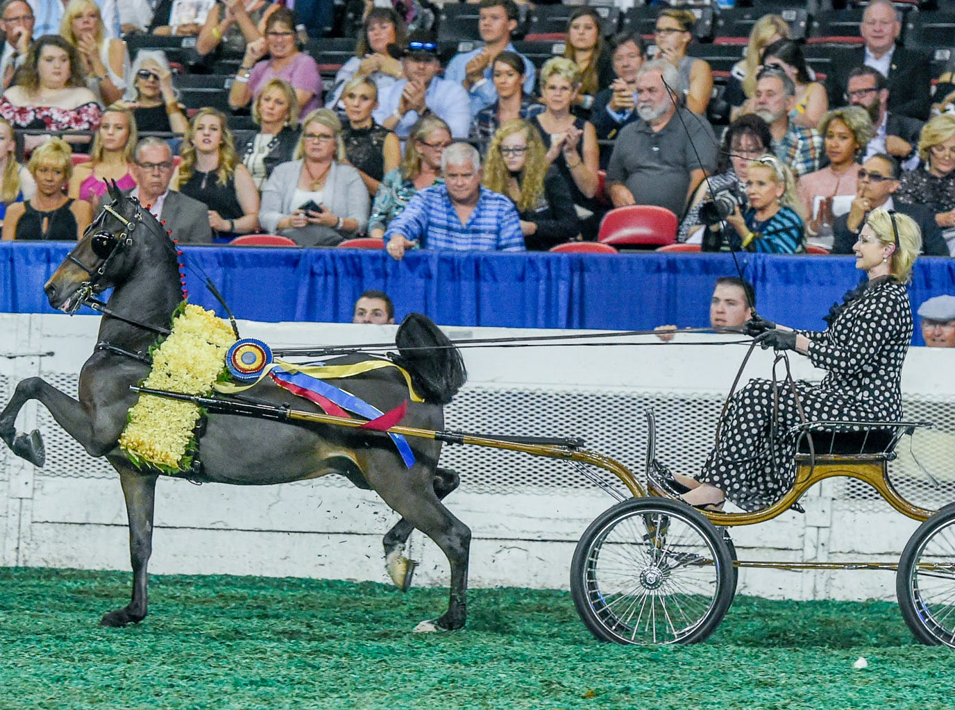 HACKNEY PONY WORLD'S GRAND CHAMPIONSHIP winner Grace Arnold driving HEARTLAND JAMIN' trained by Smith Lily