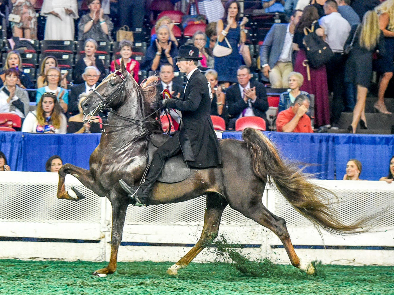 Two time winner of the 5 Gaited World's Grand Championship, Top Of The Mark receiving a strong reserve with trainer Tre Lee for Golden Creek Farm
